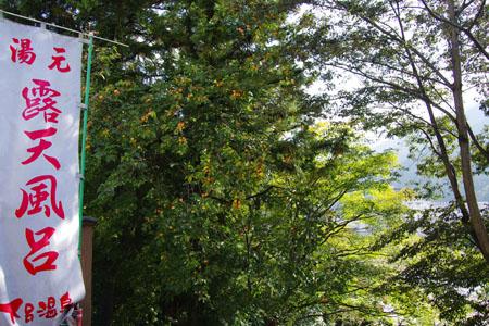 2011 目の前の柿
