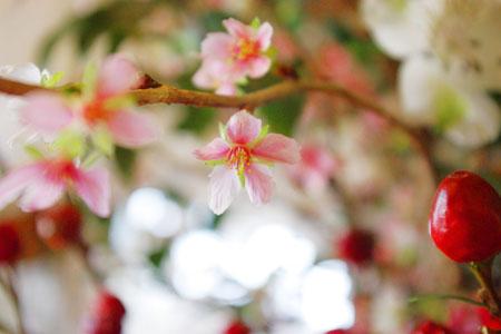 2010 寒桜
