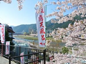 2014 Sakura